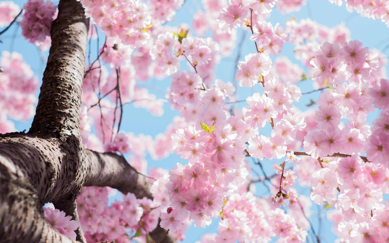 Kwiaty nawiosnę? Podpowiadamy, co nosić wiosną 2020
